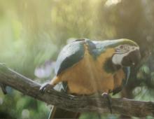 Risifrutti Pinacoco